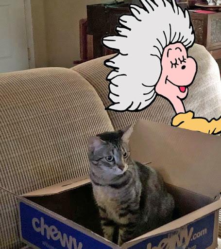 "Cleo's ""Mew and My Paw-some Pet"" Special Random Draw - Aug 1-19"