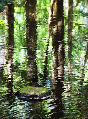 Reflections in the Stream by Sara Harley
