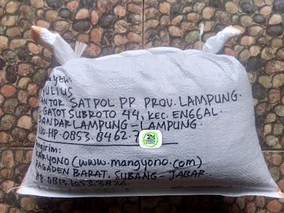 Benih Padi Pesanan M. YULIUS Bandar Lampung. Lampung.    (Setelah di Packing).