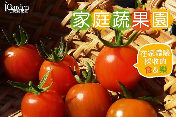 家庭蔬果園專題,前往蔬果種子賣場