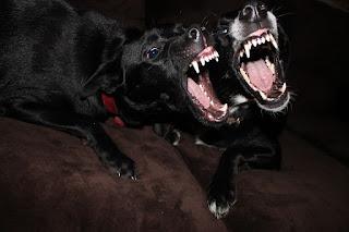 Duo Anjing