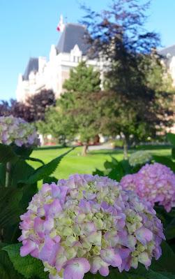 Hydrangeas by Victoria's Empress Hotel
