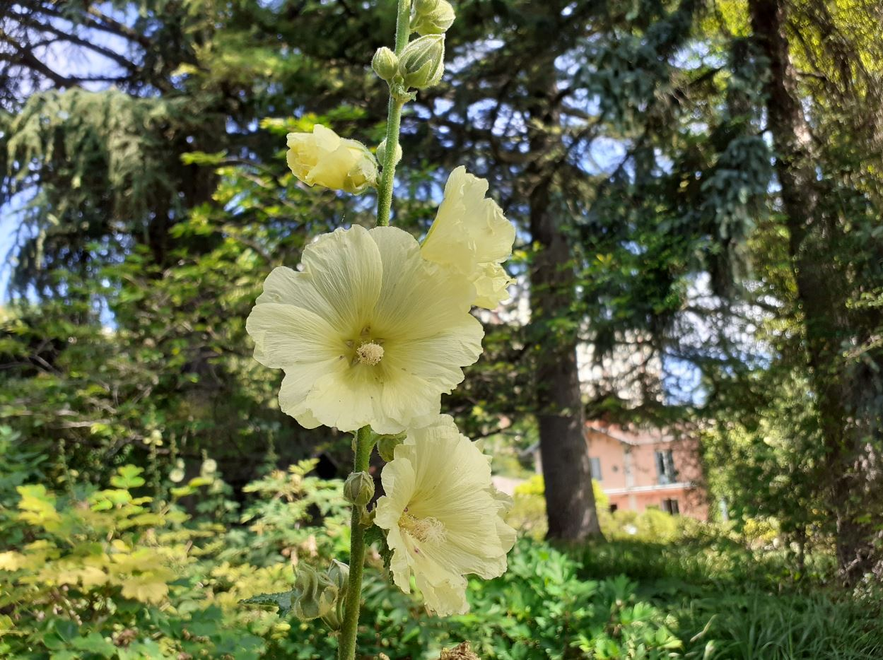 jardin la bonne maison lyon