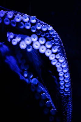 Octopus tentacles Photo by Adam Muise on Unsplash