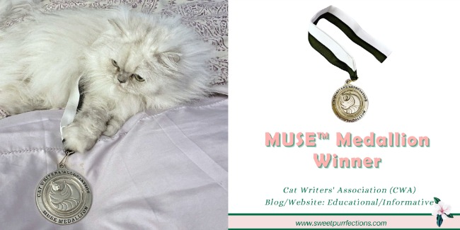 Silver shaded Persian cat, Truffle, with paw on CWA Muse Medallion