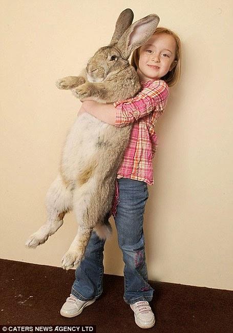 Chú thỏ to nhất thế giới