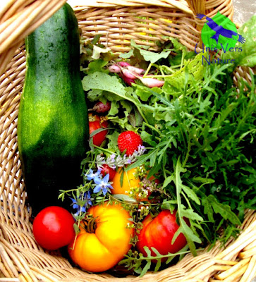ortie, purin, urtica sp. stages plantes sauvages, potager, Jura, Ain, Bourgogne