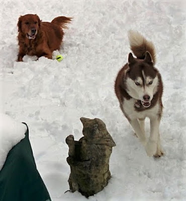 A backyard doggie playdate.  Dogs love playing in the snow