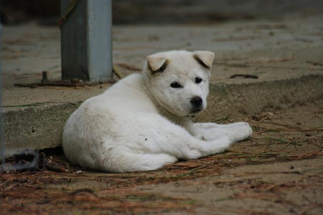 Przyjazne psom miejsca w Korei