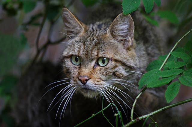 Menjinakkan kucing liar Butuh Banyak Waktu,Cinta dan Kesabaran