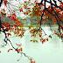 Đã bao mùa thu thay lá, tôi vẫn chưa quên được anh