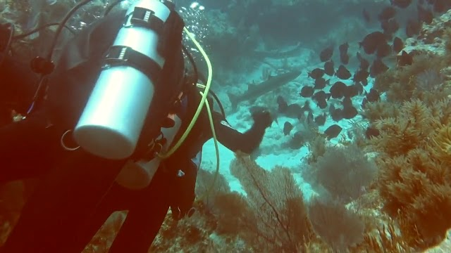 VOA Key Largo Dive March 22, 2015