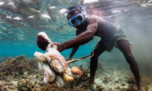 Otra mega reserva marina se proyecta en Francia