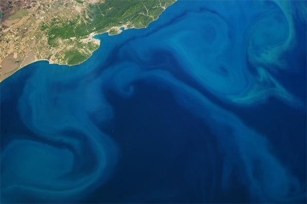 Mekarnya Fitoplankton