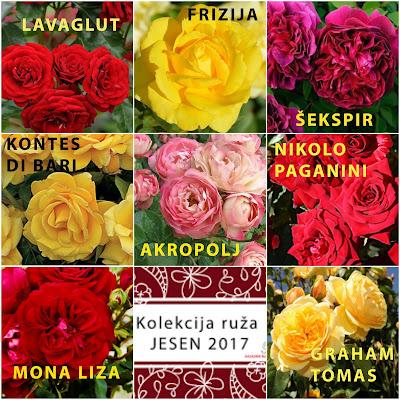 Prodaja sadnica ruza, rasadnik, Sarajevo, Tuzla, Bijeljina, Mostar, Zenica, Travnik, Banja Luka