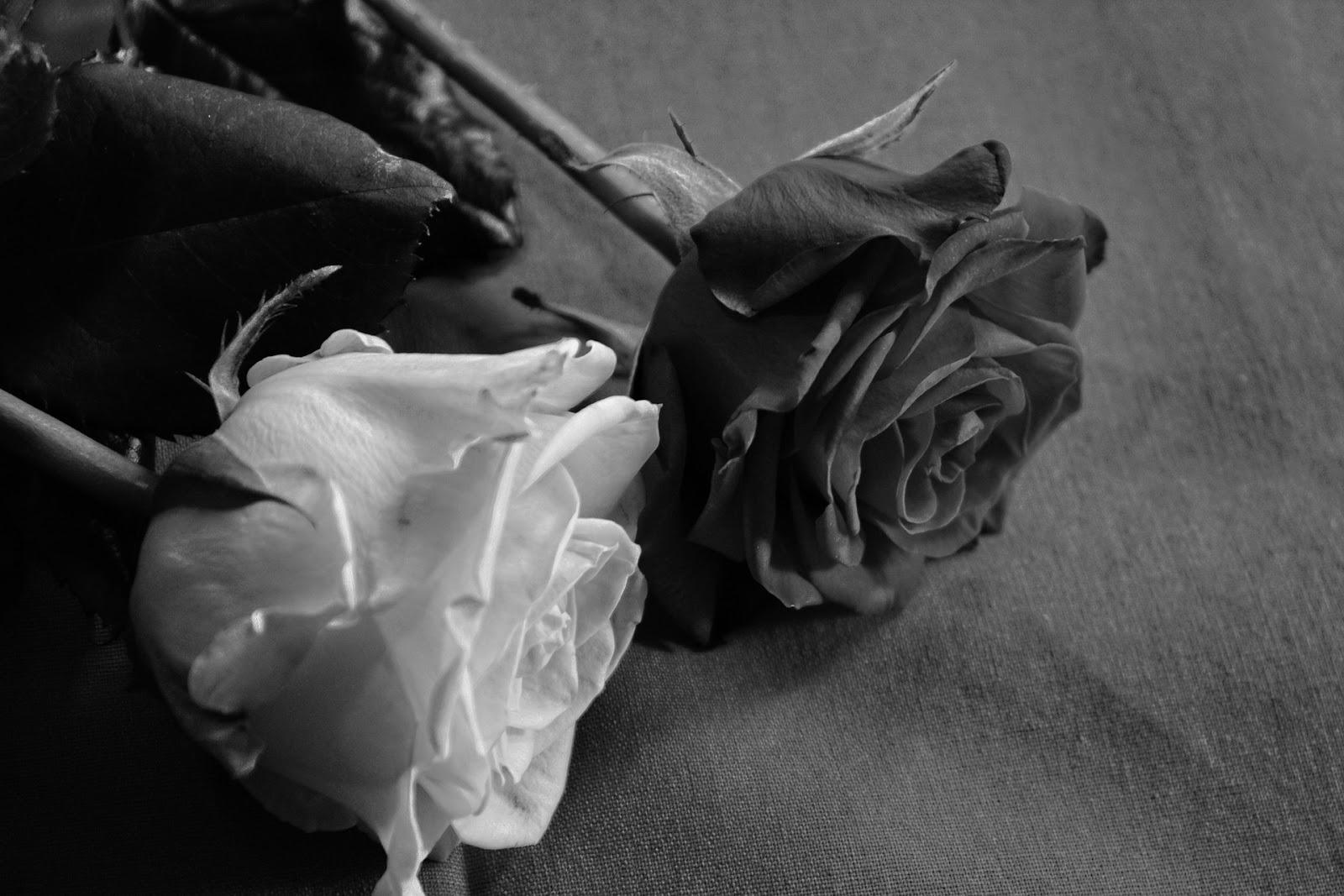Gambar Bunga Mawar Hitam Putih Koleksi Gambar Bunga