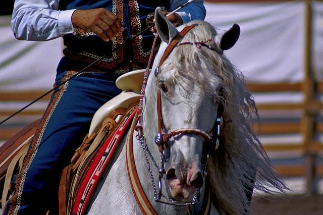 اجمل الخيول