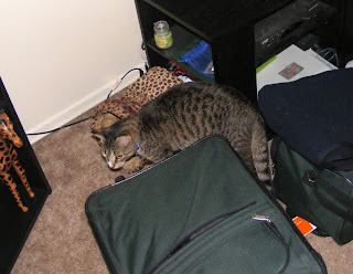 Oliver checking out their suitcases.