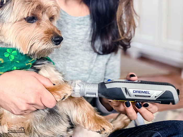 How to easily trim your pet's nails