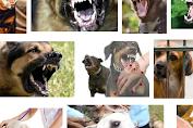 Antisipasi Rabies dan Anjing Liar, Bidang Keswan Lakukan Vaksinasi dan Eliminasi