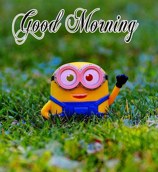 good morning wednesdayfunny images