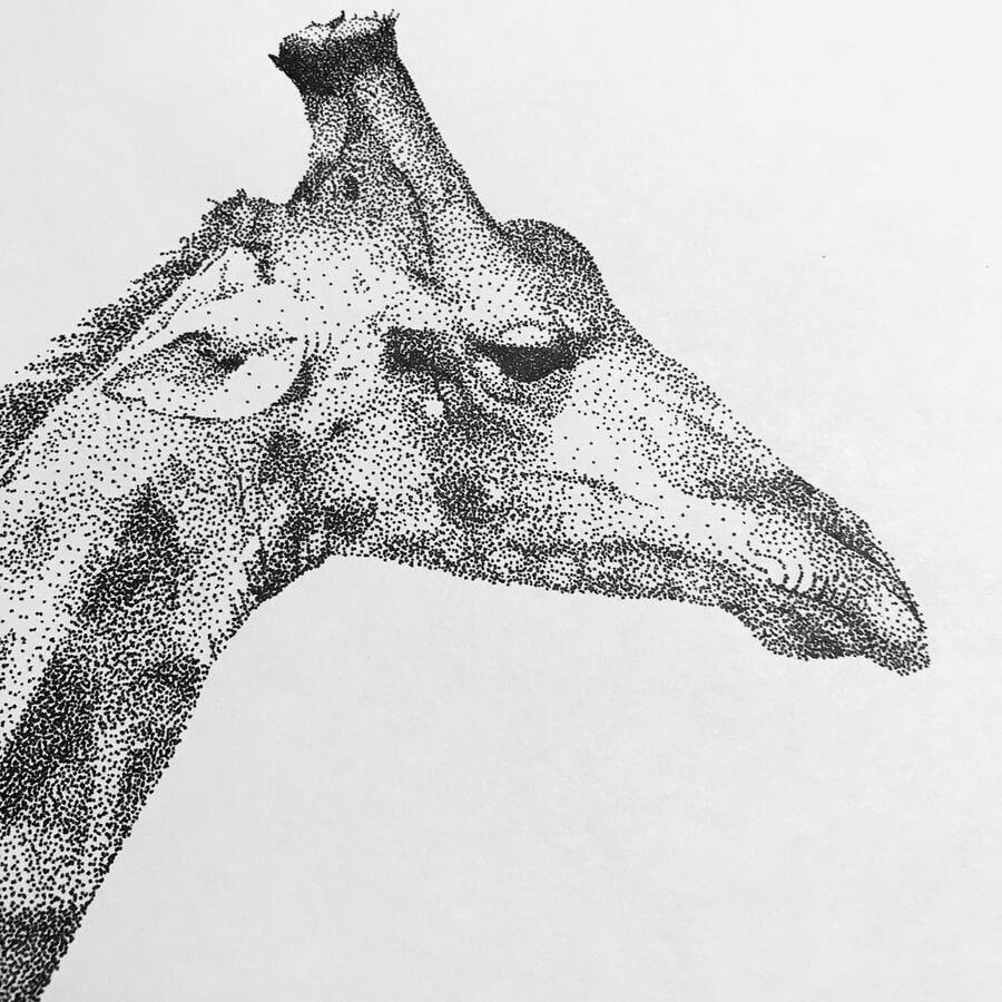 05-Giraffe-Kelsey-Hammerton-www-designstack-co