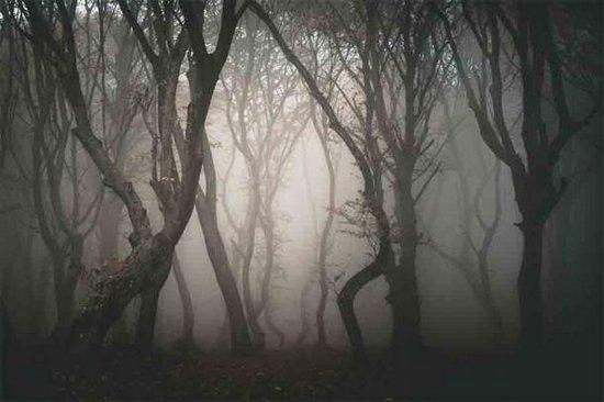 La foresta di Hoia in Romania è diventata nota per strani avvenimenti, infestazioni e attività paranormali.