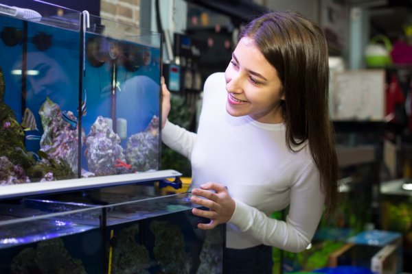Cara Merawat Air Aquarium Agar Tetap Bersih