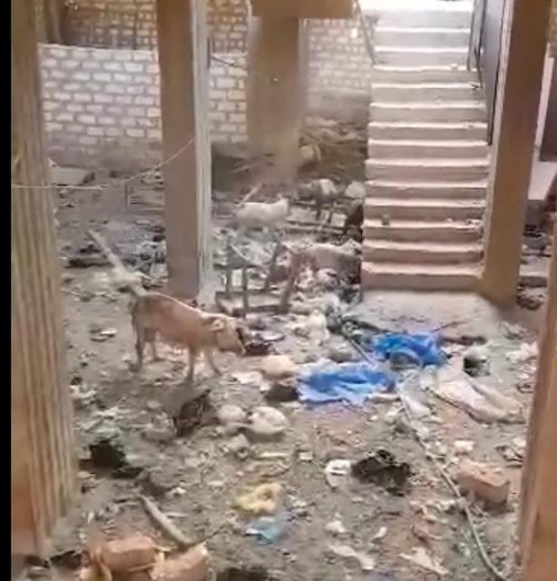 مزرعة خنازير تثير ذعر أهالي قرية مشطا بمدينة طما في سوهاج