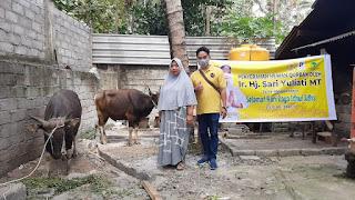 Idul Adha : Sari Yuliati Sumbang Puluhan Sapi Qurban di Lombok