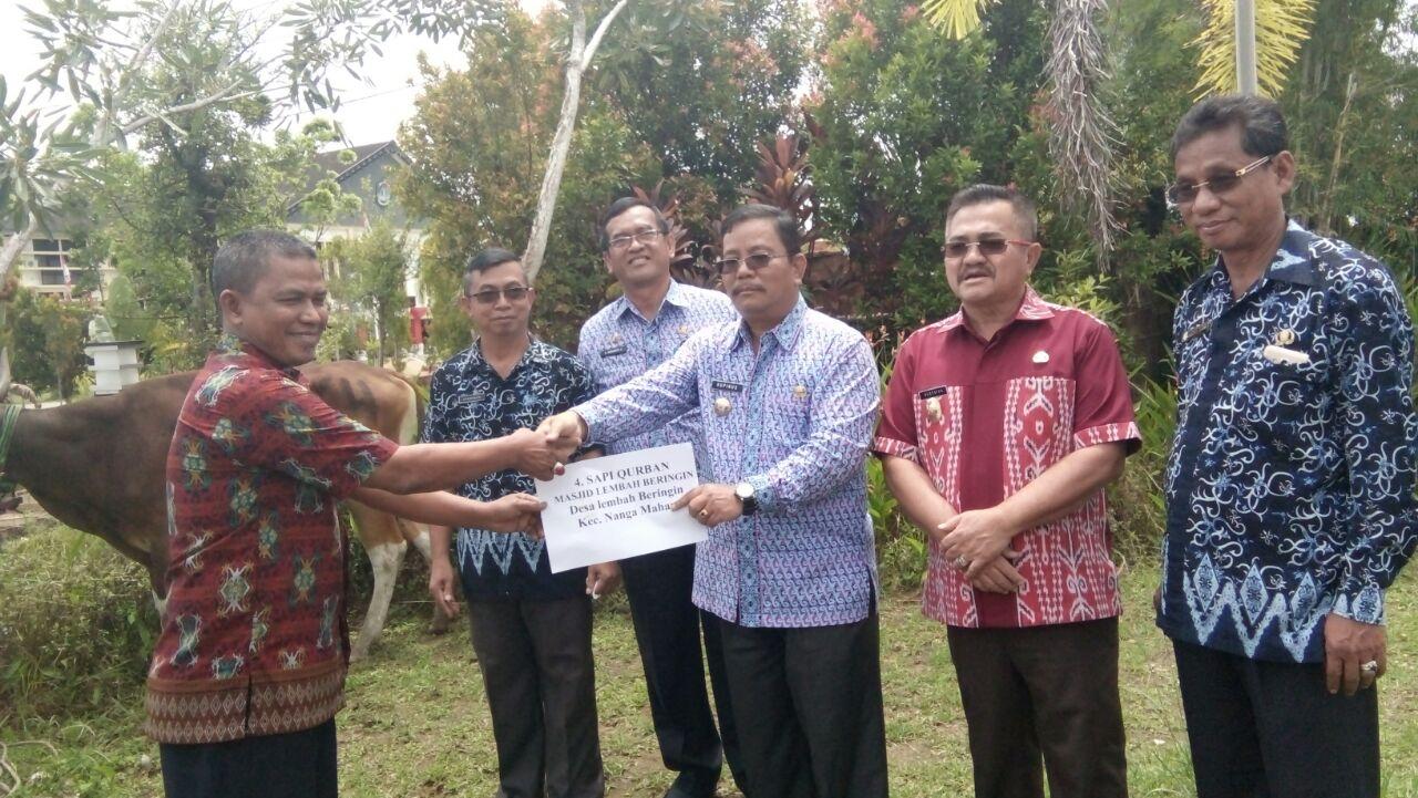 Bupati dan Wakil Bupati Serahkan Sapi kurban Untuk 7 Kecamatan