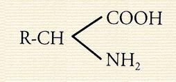 Composição Química do Aminoácido