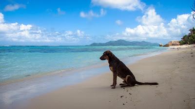 Streunender Hund am Strand auf den Seychellen