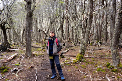 Bosque de camino al Lago de los Témpanos en el Valle de Andorra en Ushuaia, Argentina.