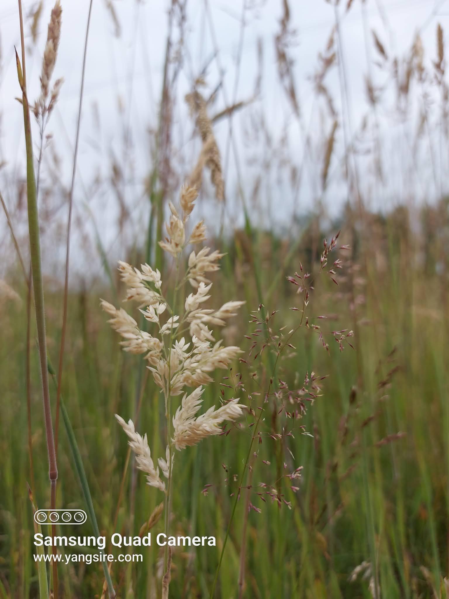 Free grass field image