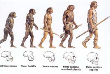 http://1.bp.blogspot.com/-uYQf1bnKoww/UXW1D1kDigI/AAAAAAAAAAk/GRZrbiUApDM/s1600/evolucion+humana.jpg