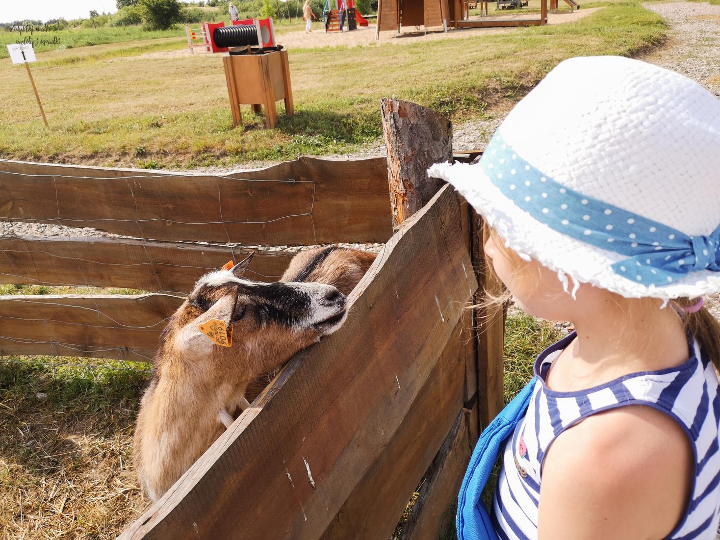 Co odwiedzić z dzieckiem w wakacje? Park Dzieje!