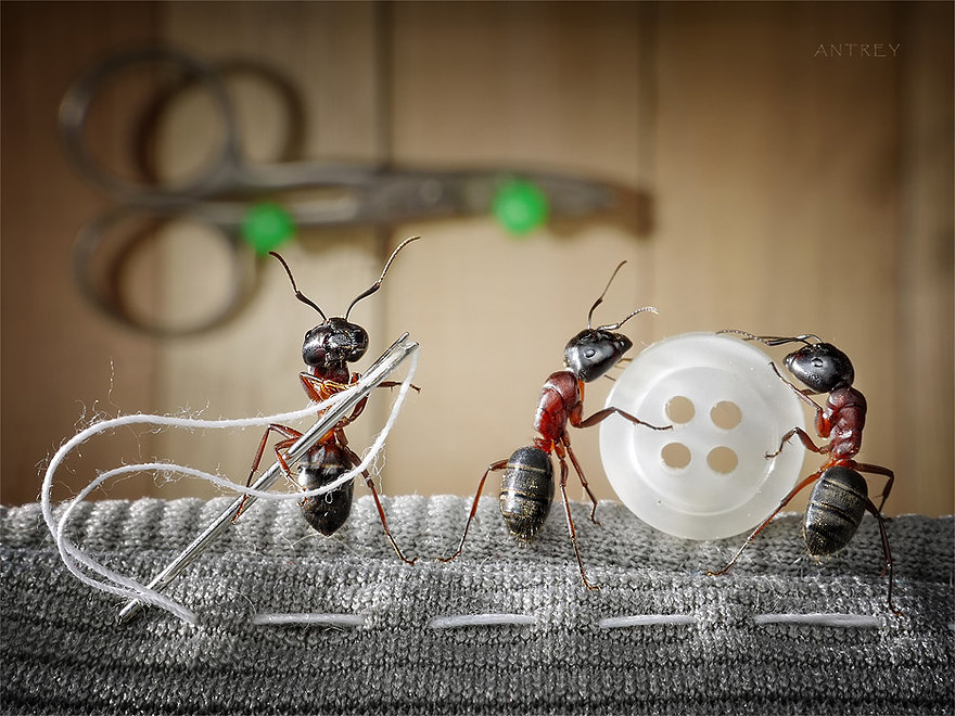 03-Grandma-Helpers-Andrey-Pavlov-Photographs-of-Ants-an-Affordable-Journey-to-a-Parallel-World