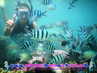 paket snorkeling karimunjawa