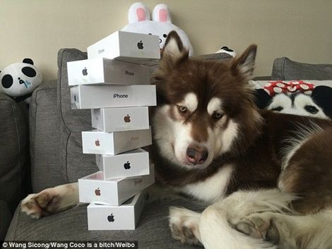 Son of China's Richest Man 'Buys iPhone 7s For His DOG' (Photos)