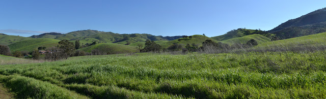 grassy hills with oaks