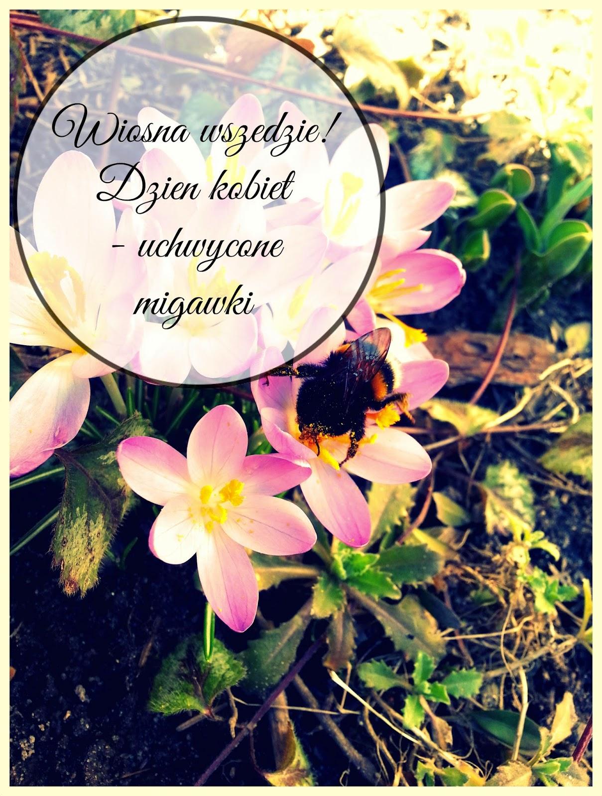 zwiastuny wiosny