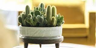 Cacti In a pot. Darren Wogman Gets Gardening
