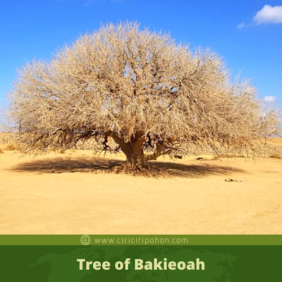 Tree of Bakieoah