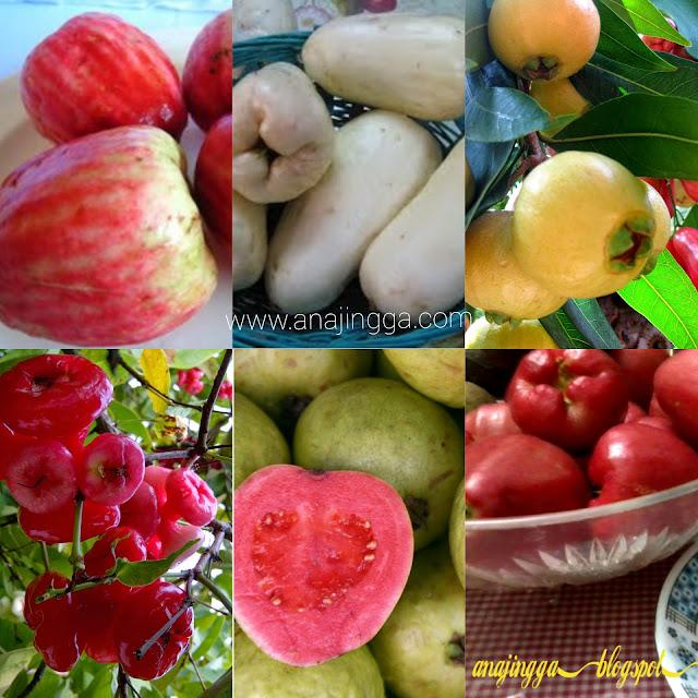 jenis-jenis buah jambu