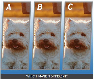 Quiz Diva Spot the Different Dog Quiz Image6
