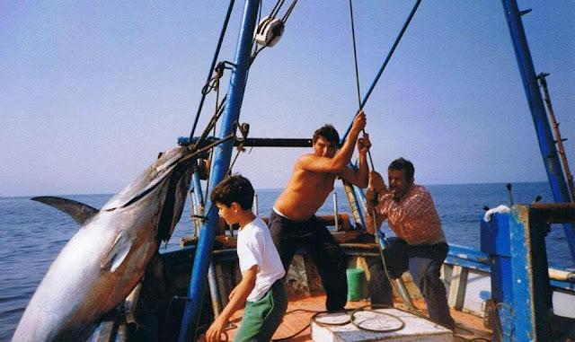 TONYINA - Un hombre un anzuelo en la pesca de atún rojo en el Mediterráneo