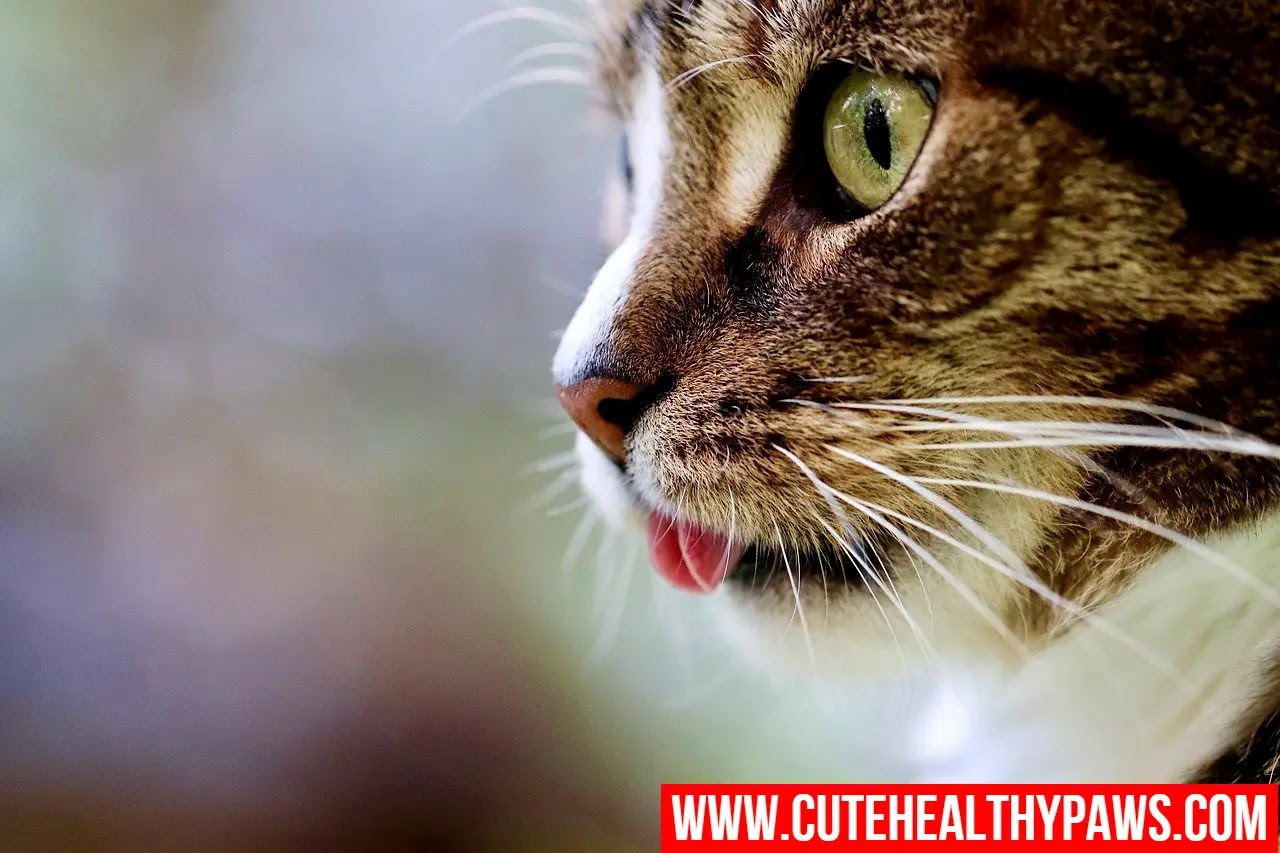 Protecting Cats From Cancer