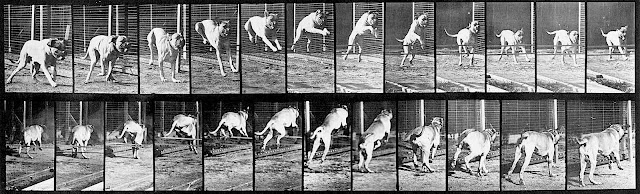 a running dog by photographer Eadweard Muybridge