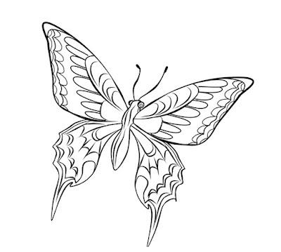 Sketsa gambar kupu kupu mudah